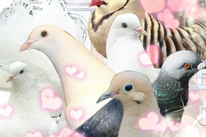 Hatoful Boyfriend Is Making Its Way To PS4 & Vita In 2015
